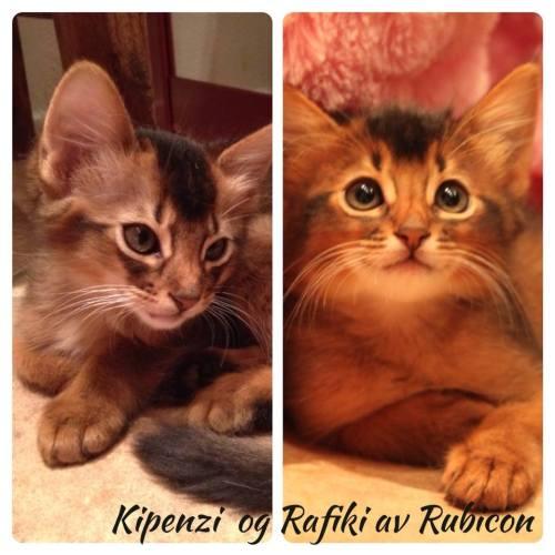 Rafiki og Kipenzi nov 2013