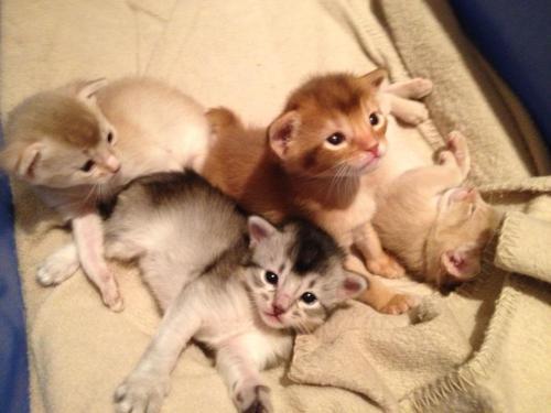 Rubicon kittens 2012
