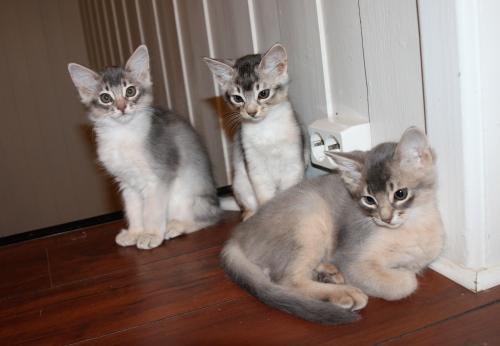 Alle tre katungene
