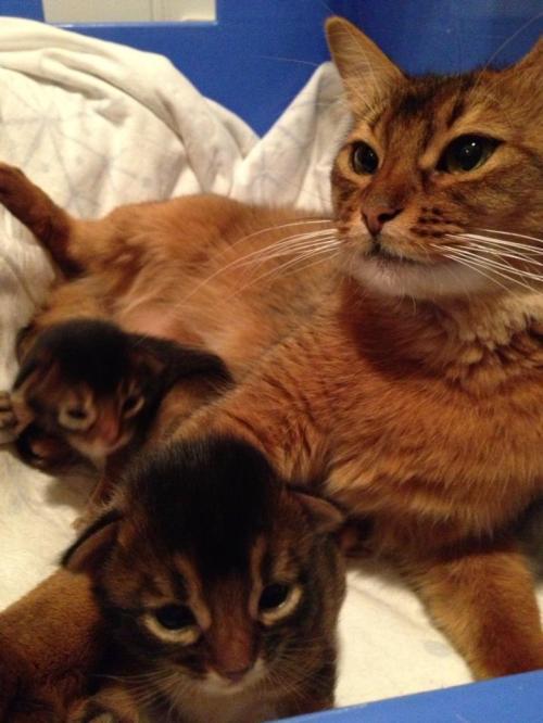 Ophelia m kattunger