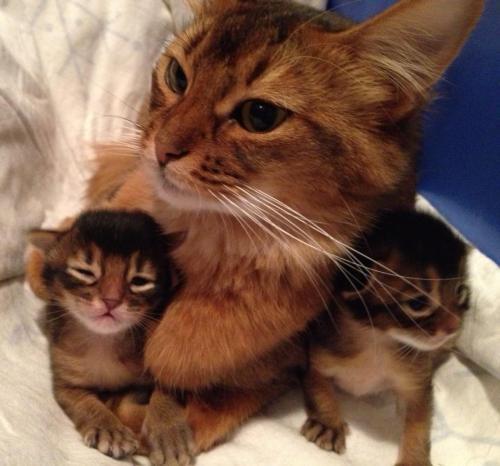 Ophelia med kattungene sine sept. 2013