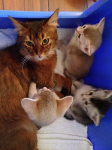 Ophelia med Lekis kattunger