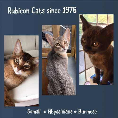 Rubicon Cats since 1976